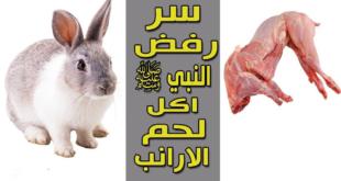 لماذا رفض النبي صلى الله عليه و سلم اكل لحم الأرنب معلومة ستسمعها لأول مرة